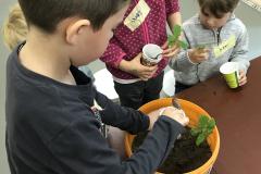Bäume pflanzen