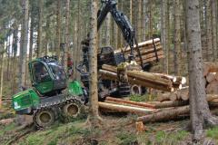 Waldwirtschaft für Einsteiger - Praxis
