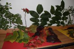 blaetter-schule-dinges-natur-baum