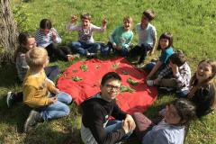 wald-pflanzen-memory-dinges-natur-kinder-schulen