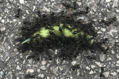 geburtstag-wald-dinges-raupe-ameisen